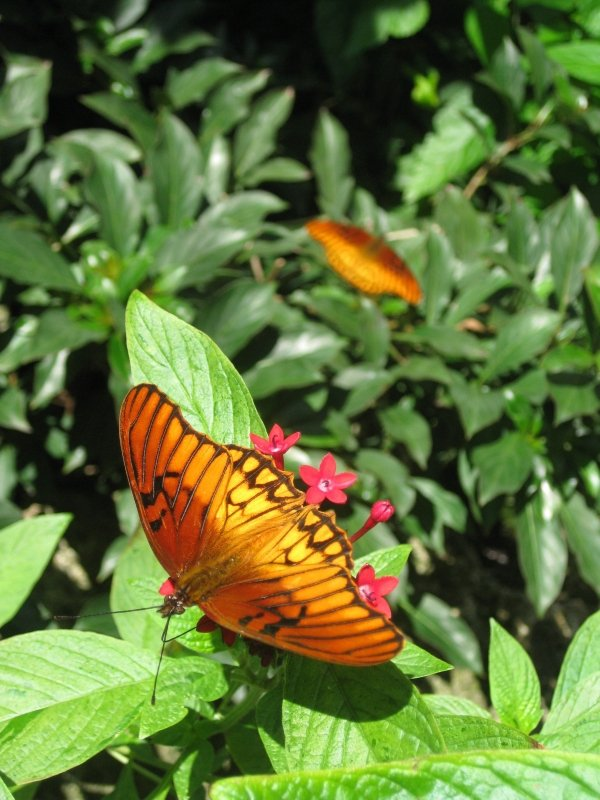 Monarch Butterflies Wildlife Florida