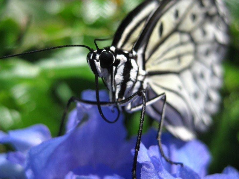White Butterfly Wildlife Florida