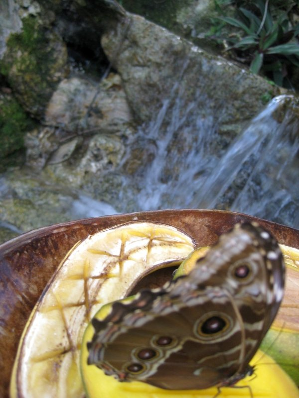 Bananas Butterfly Wildlife Florida