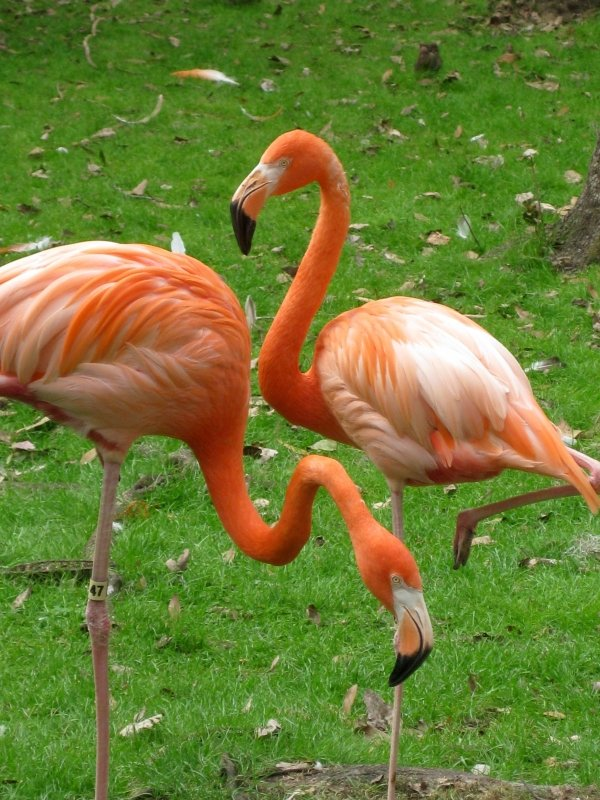 Pink Flamingo Wildlife Florida