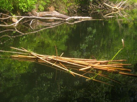 Hiking The Ocala National Forest In Florida Part I