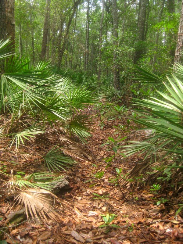 Hiking Trail in the Ocala National Forest Florida