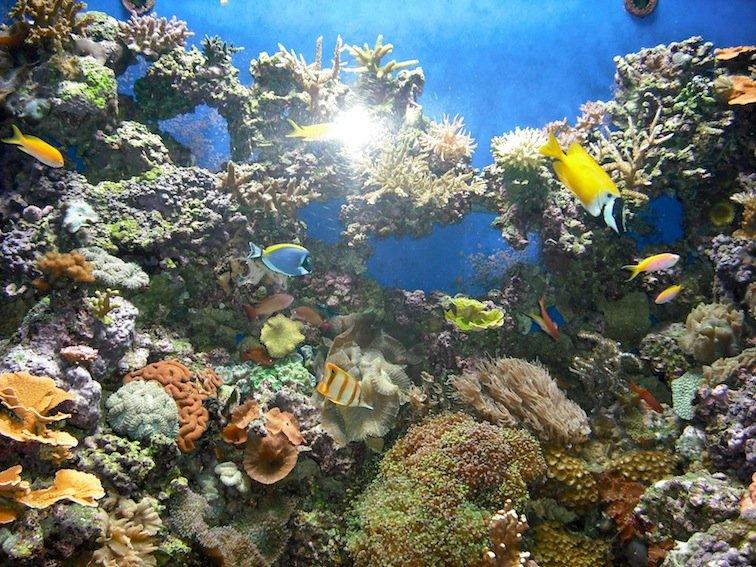 Florida Aquarium Coral Reef Marine Tampa Bay Fish