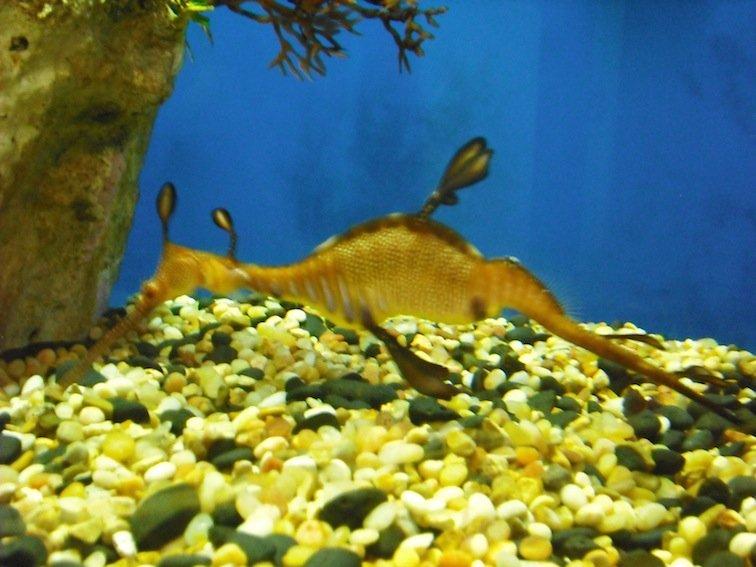 Florida Aquarium Coral Reef Marine Tampa Bay Fish Seahorse