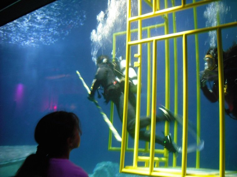 Florida Aquarium Coral Reef Marine Tampa Bay Fish Shark Diving