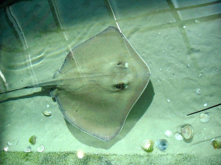 Florida Aquarium Coral Reef Marine Tampa Bay Fish Stingray
