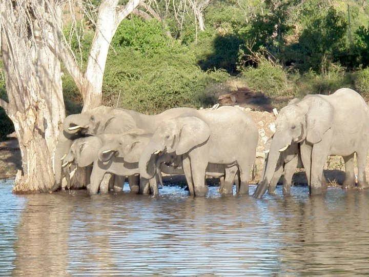 Elephants at the Watering Hole in South Africa.
