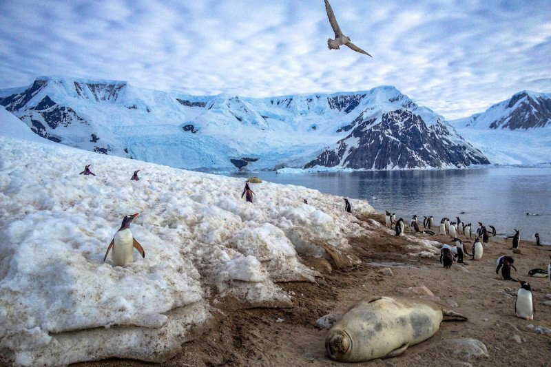 Traveling to antarctica 10 best images frozen in time for Best way to travel to antarctica