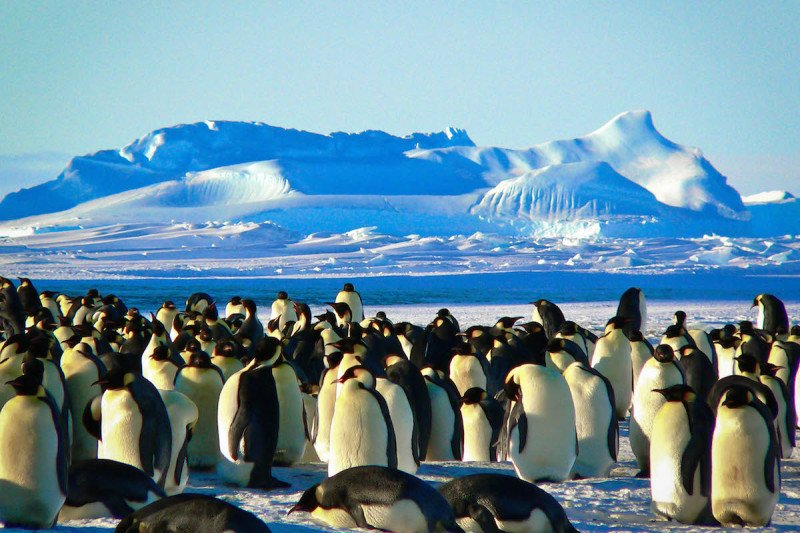 More penguins gathered on a sunny day in Antarctica