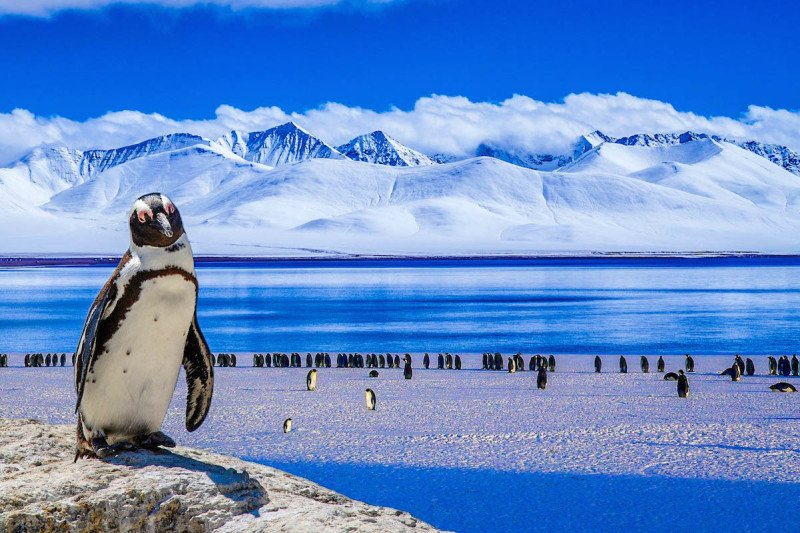 There are a variety of penguins who travel to Antarctica.