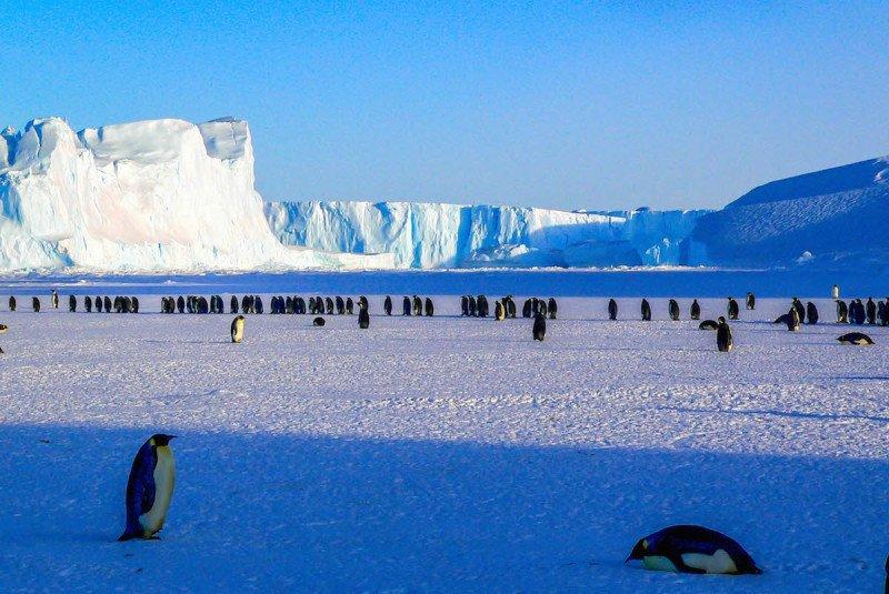 Penguins gathered on the Antarctic peninsula