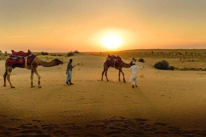 Safari Camel Desert