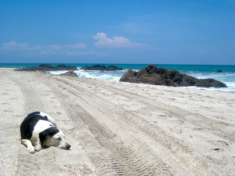 Pup Napping on the Beach