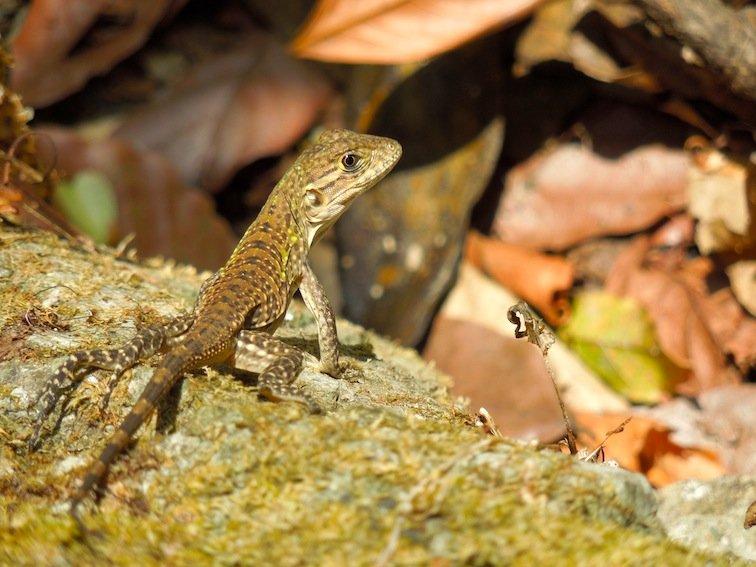 Lizard Sunbathing