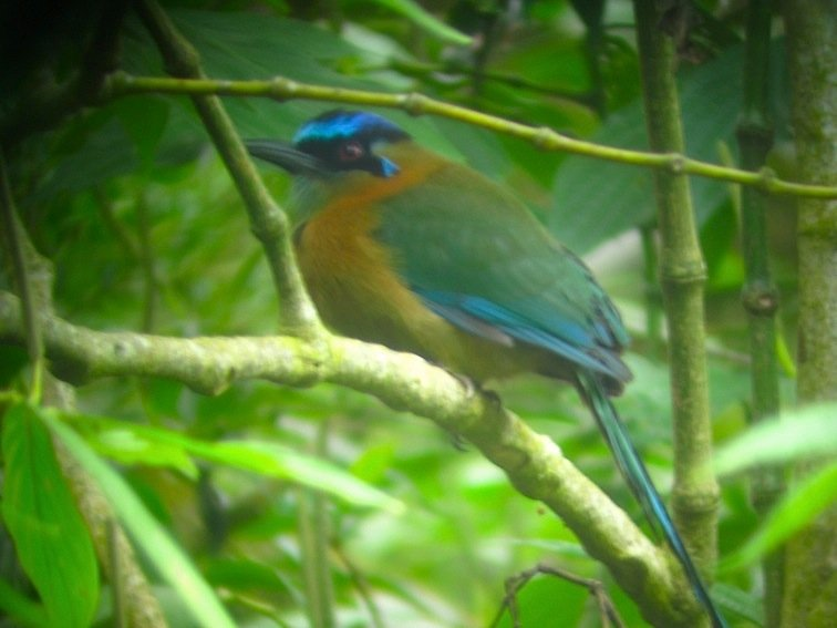 Exotic Bird Cloud Forest Tour Costa Rica Central America