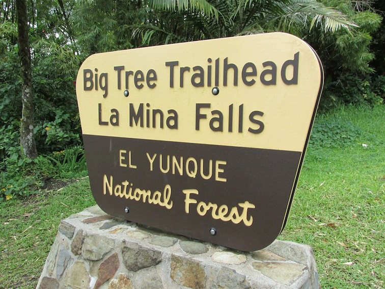 Big Tree Trailhead Sign