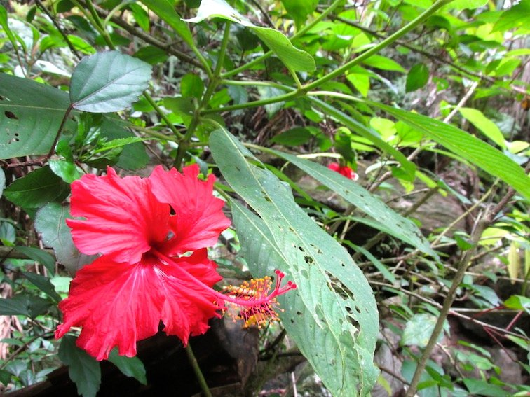 Red Flower Blooming