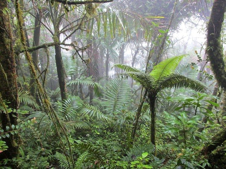 Prehistoric El Yunque