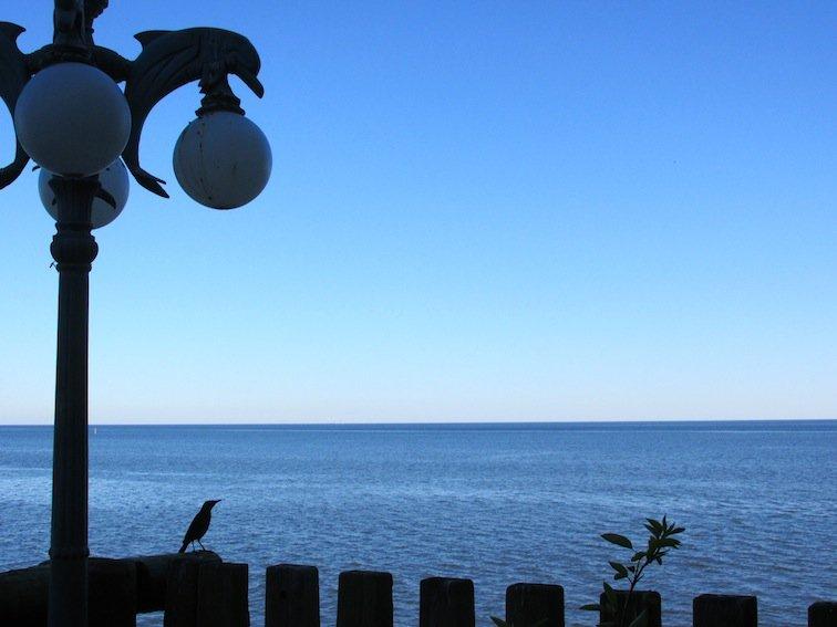 Seabird Gazing