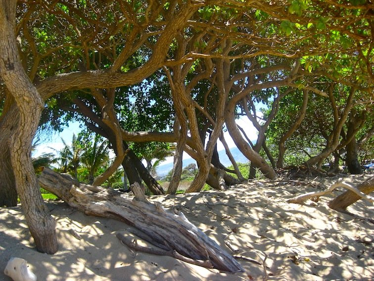 Beach in the Trees