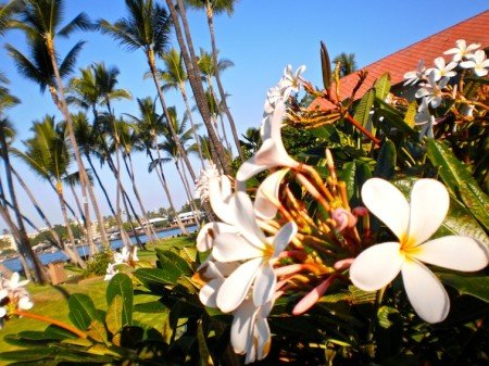 Flowers in Hilo