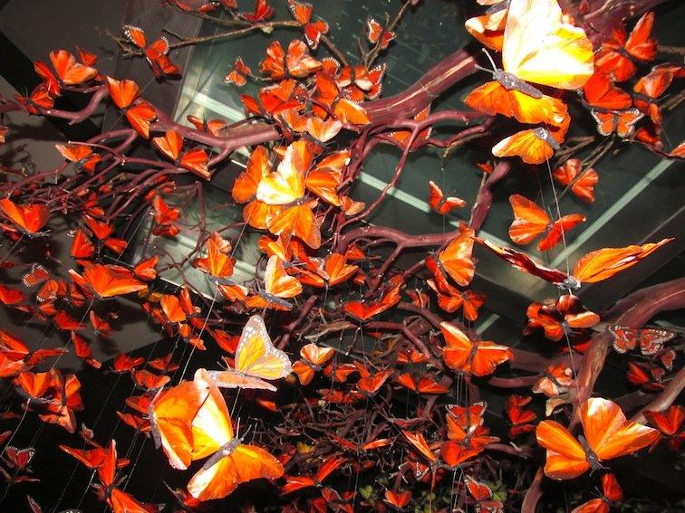 Mandarin Butterflies
