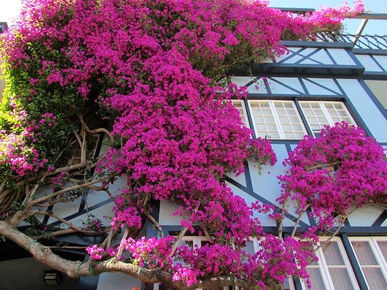 Lombard Street Flowers