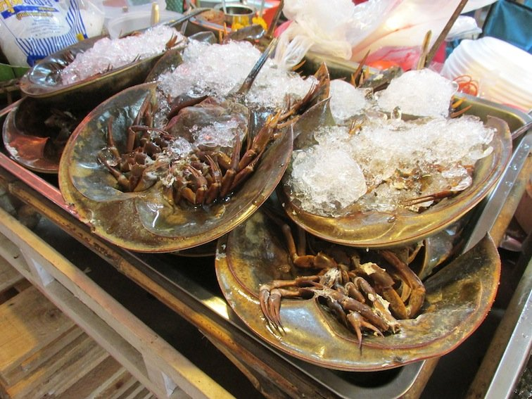 Horseshoe Crab Food