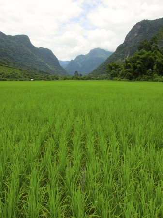Trekking to Chantanohm Banna Village Northern Laos Rice Field
