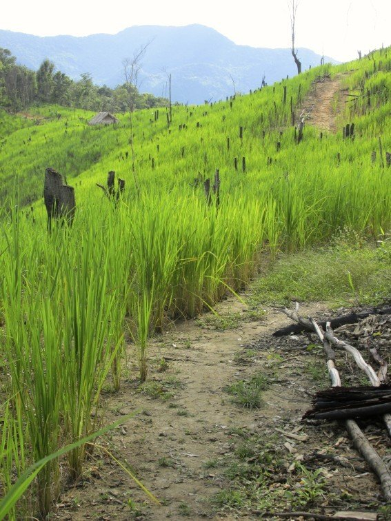 Trekking to Chantanohm Banna Village Northern Laos Mountains Rice Field Trail