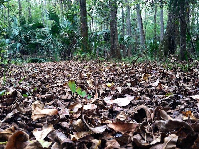 Florida Trail Hike Leaves Fall