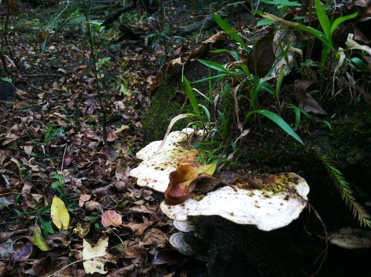 Florida Trail Hike Mushroom
