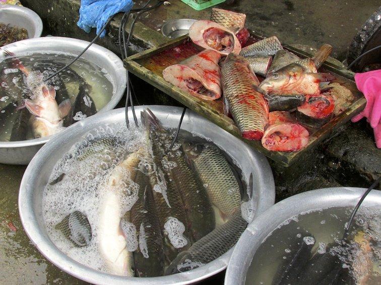 Sapa Vietnam Market Fish