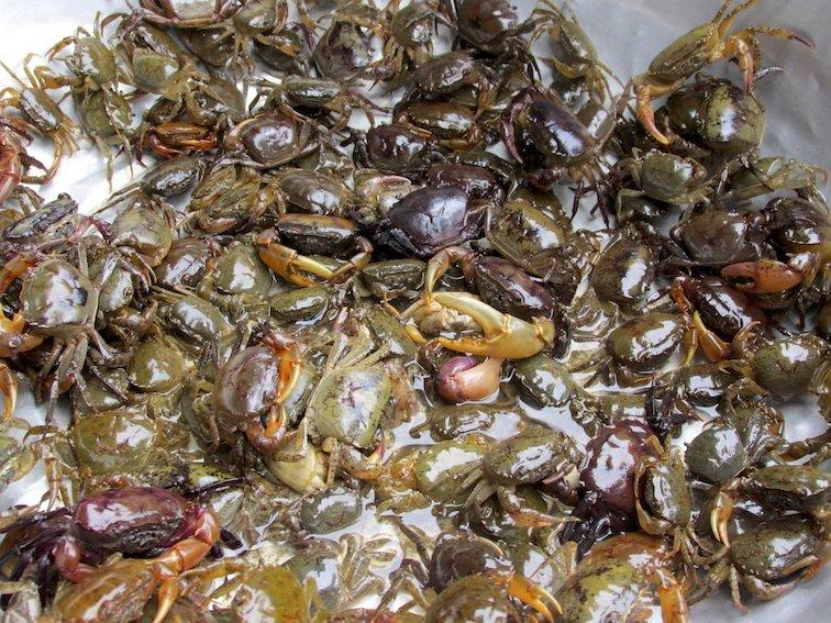 Sapa Vietnam Market Crabs