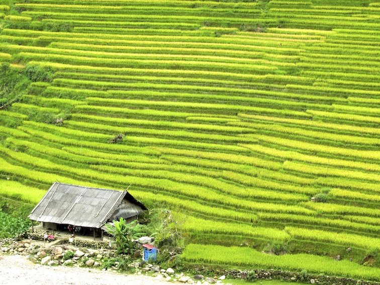 Sapa Vietnam Rice Fields Southeast Asia Rice Fields