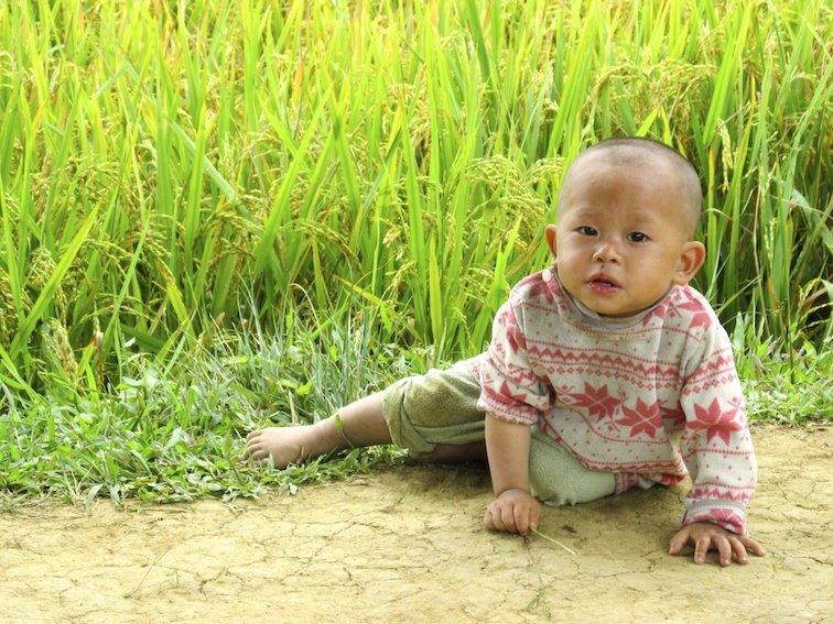 Sapa Vietnam Rice Fields Southeast Asia Rice Fields