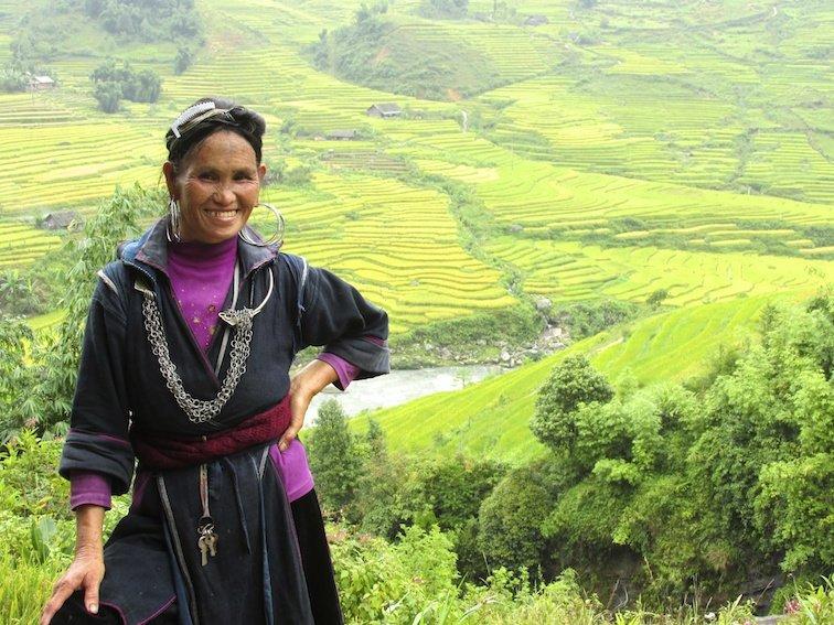 Sapa Vietnam Rice Fields Southeast Asia Rice Fields Local Labor Woman
