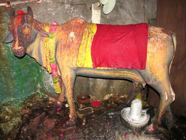 Gupteshwor Mahadev Cave Pokhara Nepal Cow Sacrifice