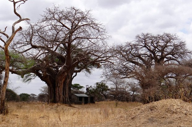 Baobab South Africa Tanzania Wandering Educators