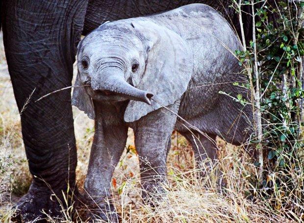 Megano Travels Elephant Plains South Africa
