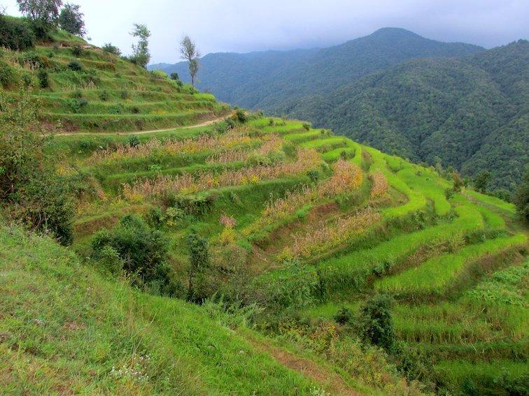 Hiking Shivapuri Peak in Kathmandu, Nepal Rice Field