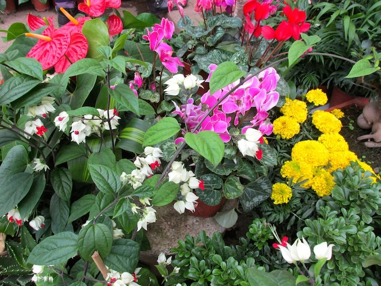Kunming Bird & Flower Market China