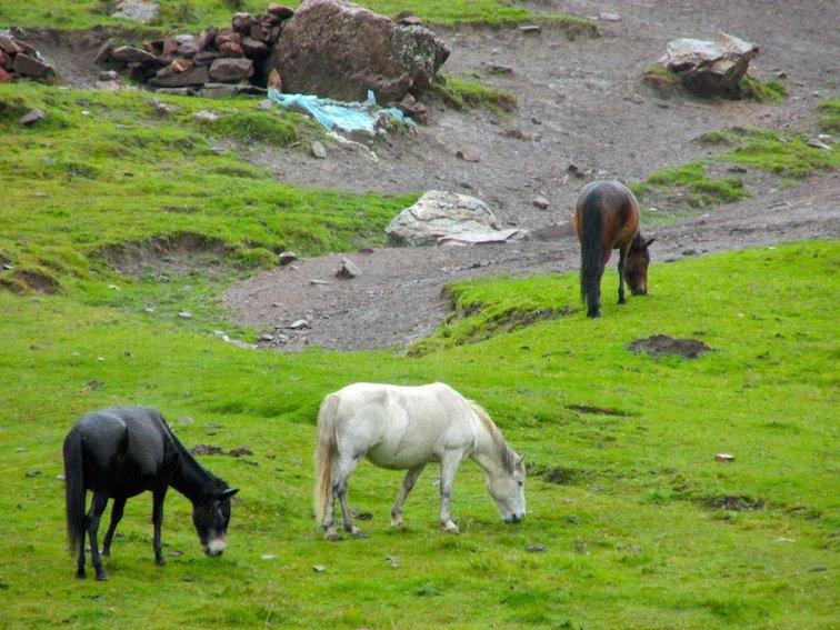 Tibet Road Trip to Huzhu Beishan Park Horse