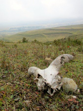 Tibet Road Trip to Huzhu Beishan Park Skull Field