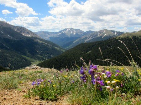 Independence Pass Continental Divide Aspen Colorado USA Flowers Blooming
