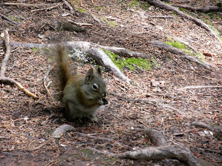 Hiking Banff Johnston Canyon Trail Canada Alberta Squirrel