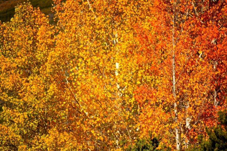 Fall deals in aspen co