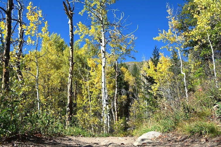 Colorado Aspen Mountain Hiking Autumn Fall Trail