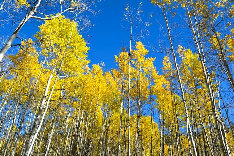 Colorado Aspen Mountain Hiking Autumn Fall Trail Trees Yellow
