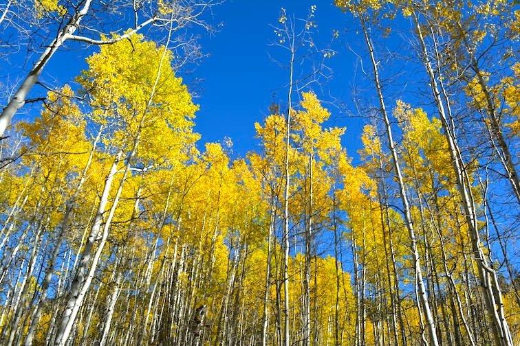 Colorado Aspen Mountain Hiking Autumn Fall Trail Trees Yellow